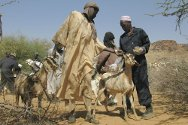 Darfur. The ICRC livestock vaccination programme seeks to help breeders and pastoralists in Darfur to vaccinate their animals against five major endemic diseases.