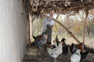 Each woman raises up to 15 chickens and sells the eggs that are surplus to their family's needs