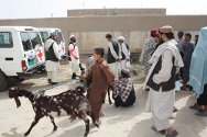 Etehad Agricultural and Livestock Cooperative, Kandahar, Afghanistan. In 2011, the ICRC para-vet programme plans to train 500 farmers as basic veterinary workers, while 30 para-vets will treat 150,000 head of livestock and up to 20,000 animals will be vaccinated.