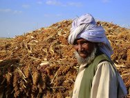Gash Barka region, Eritrea. A farmer with the product of the day's harvest.