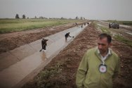 Kirkuk. An irrigation canal is rehabilitated in Daquq, with the support of the ICRC.
