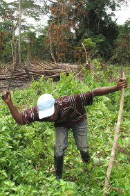 Near Zorgowee Town, Nimba County, Liberia. Zeyieu Gondo prepares swampland for planting, using tools donated by the ICRC.