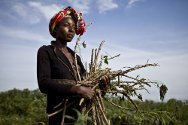 Republic of the Congo, Owando. A woman receives cassava cuttings, agricultural equipment and fishing supplies from the ICRC.