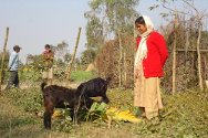 Partner organizations provide goats as micro-economic assistance for the families of missing persons.