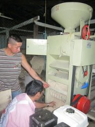 Colombia: the ICRC helps with rice production in the department of Guaviare.