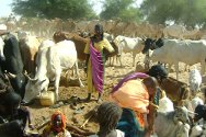 Kutum, Darfur. People fetch water for their livestock.