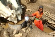 Kutum, Darfur. A woman fetches water for some cattle.