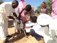 Ursula Kayali (top right), the ICRC's livestock expert in Sudan, on a field visit in Darfur.