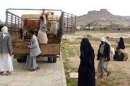 Sa'ada. Returnee's receive livestock provided by the ICRC.