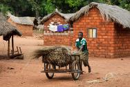A man from Zémio pushing a cart provided by the ICRC as part of its community-based project to boost the economy in the south-east of the Central African Republic.
