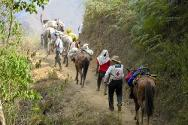 Rural area of Cauca, 19 September 2012. A caravan