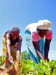 Women work in their market garden.