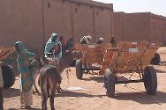 South Darfur. In January 2012 the ICRC distributed donkeys and donkey carts to vulnerable displaced women in Nyala.