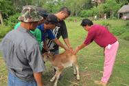 The ICRC trained selected residents of Guihulngan to provide veterinary care to ICRC-donated carabaos and other livestock, to increase farm productivity and income.