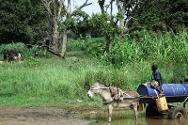 Donkey carts are a common means of transporting water from the River Keniati. Upstream, children and women can be seen bathing and washing clothes. People drink the same water, resulting in cholera and other water-borne diseases