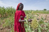 Sudan. A displaced woman tends to her crops.