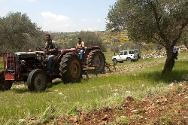 The village of Yanoun, northern West Bank. Since these Palestinian farmers have limited access to their land, which is situated near the Israeli settlements, the ICRC liaises with Israeli authorities to ensure that farmers are able to work in their olive groves.