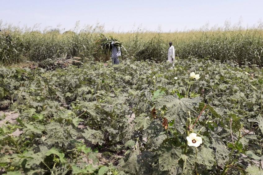 Tchad : distribution de semences pour soutenir les communautés hôtes et déplacées
