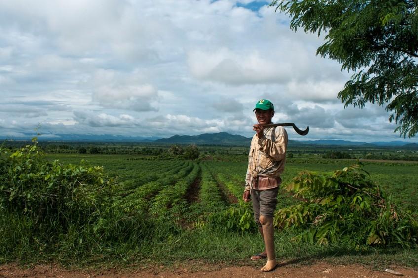 Camboja: de campos minados a campos de arroz