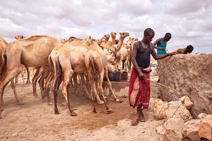 索马里:气候冲击改变传统游牧生活方式
