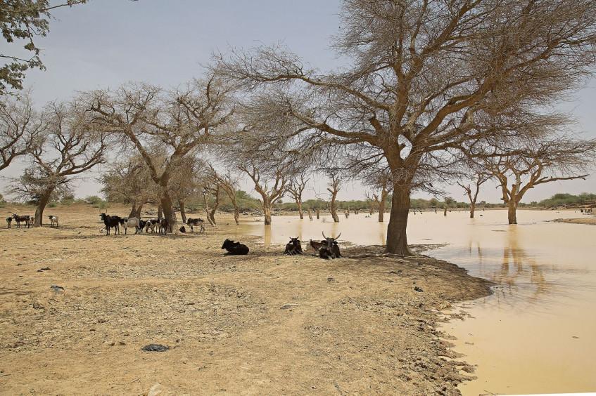 Humanitarium - La double vulnérabilité du Sahel face au changement climatique et aux conflits armés : quelles conséquences pour les populations civiles ?