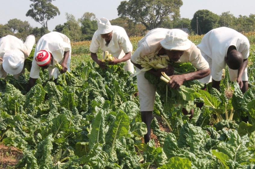 Simbabwe: Wasserversorgungssysteme für Häftlinge im Jahr 2015 erneuert