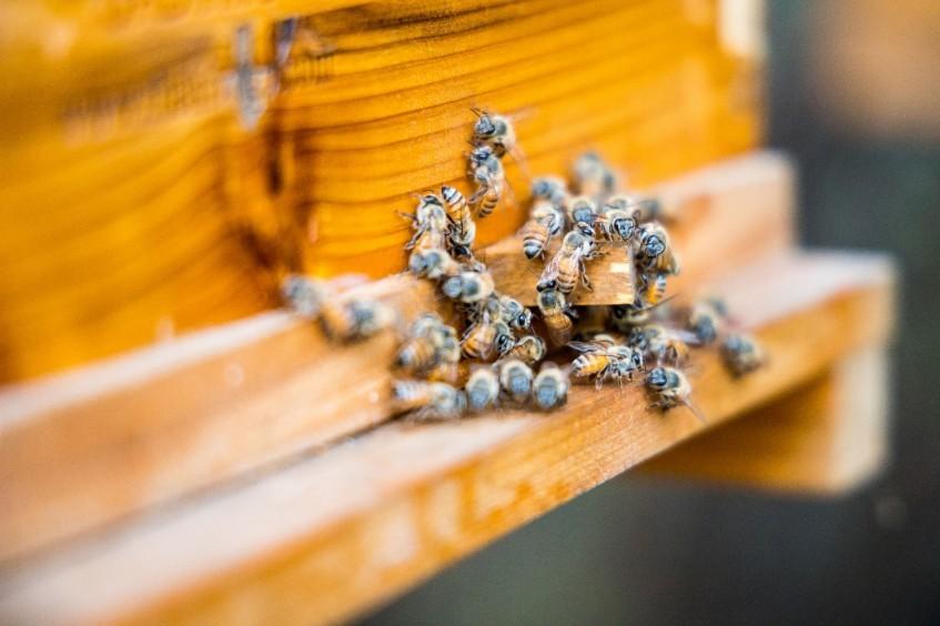 索马里:蜜蜂嗡嗡,收入噌噌,重建自立