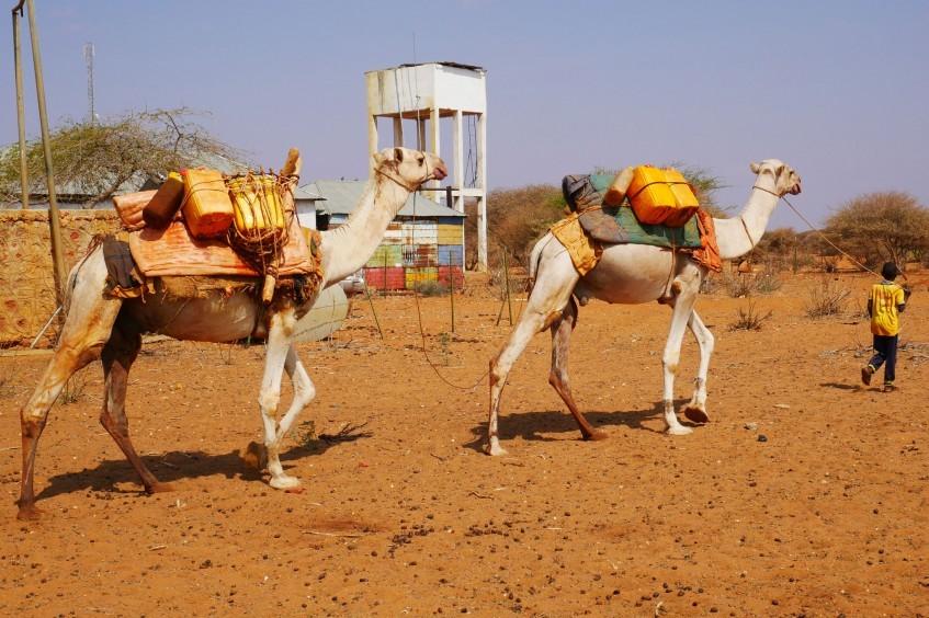 索马里:流水把牧民们聚到一起