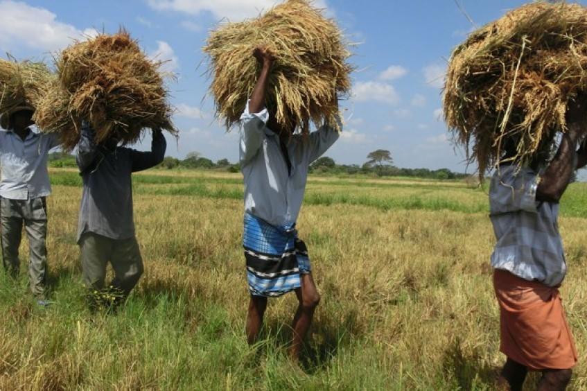 Sri Lanka: las personas afectadas por el conflicto pasado recuperan la estabilidad económica