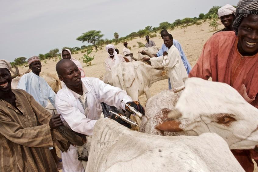 En 2017, plus de 1 200 000 têtes de bétail ont été vaccinées au profit de 30 000 ménages