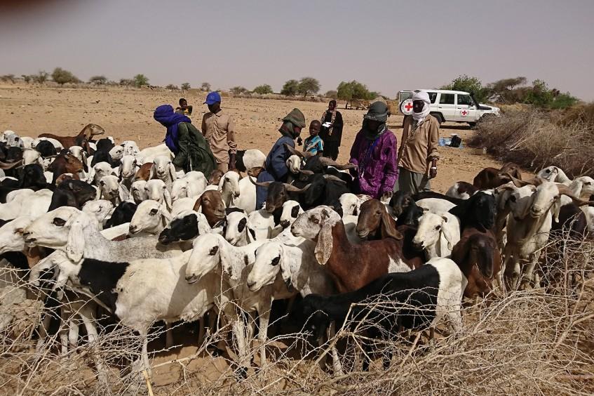 Niger : plus de 8000 ménages d'éleveurs appuyés en aliments bétail pendant la période de soudure
