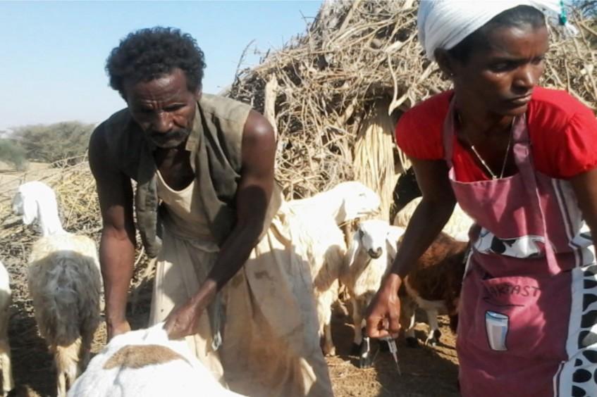 Érythrée: Faits et chiffres 2015
