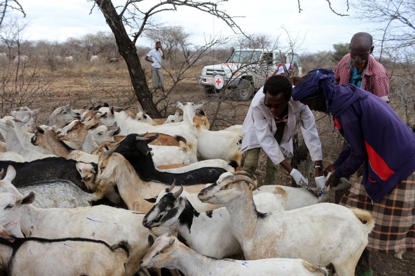 埃塞俄比亚:疫苗接种为牧民社区注入新活力