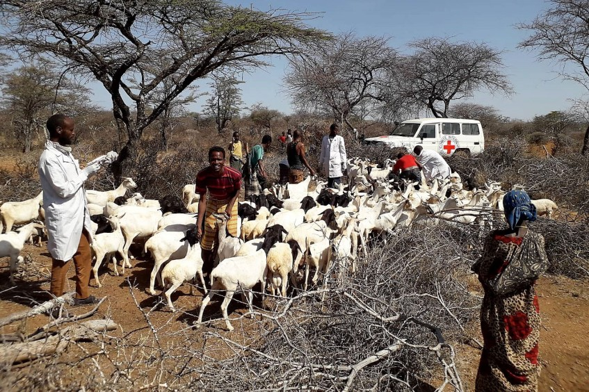 Ethiopia: Nearly 500,000 animals vaccinated in support of violence-affected communities