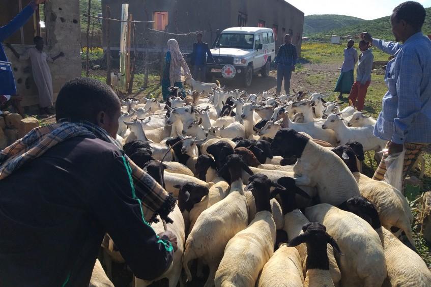Restauração dos meios de subsistência dos criadores de gado na região Somali da Etiópia