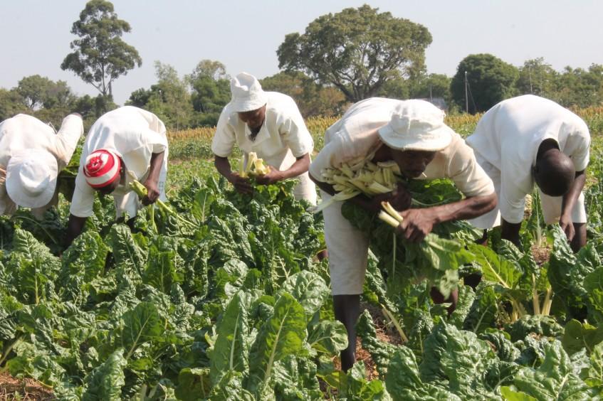 Simbabwe: Wasserversorgungssysteme für Häftlinge im Jahr 2015 rehabilitiert