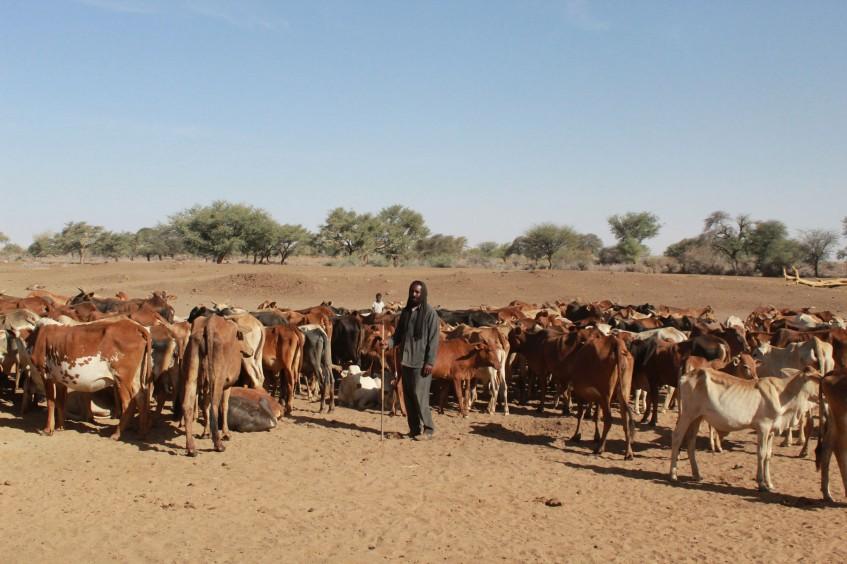 اللجنة الدولية تُجدد آمال مُربي المواشي في السودان