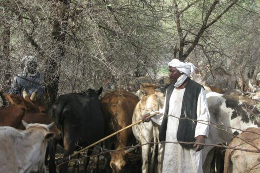 Sudan: Aldoma and the four-hour trek to save his animals