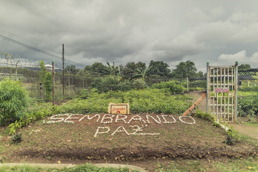 Planting hope: In Panama, a vivarium is helping reforest the lives of prison inmates