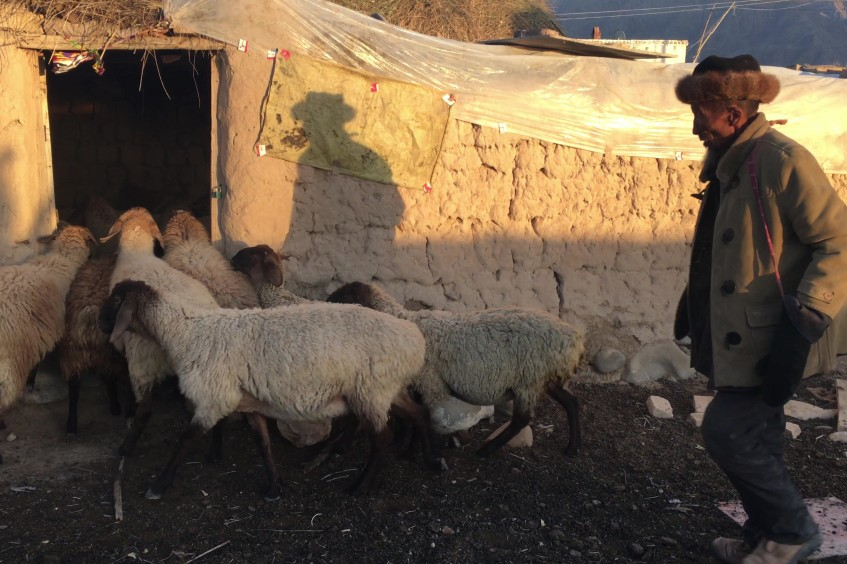 China: Livelihood project reduces poverty, changes mindset in Xinjiang