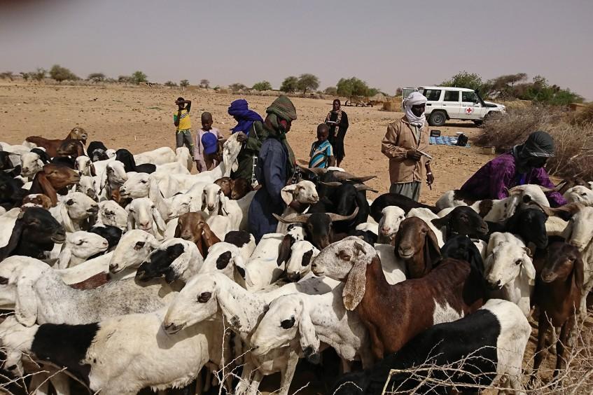 Mauritanie : distribution d'aliment de bétail à Bassikounou