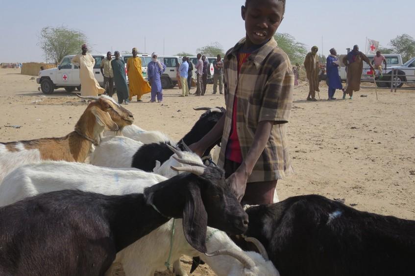 Niger : Bello Ousmane, un jeune berger qui veut sauver son bétail