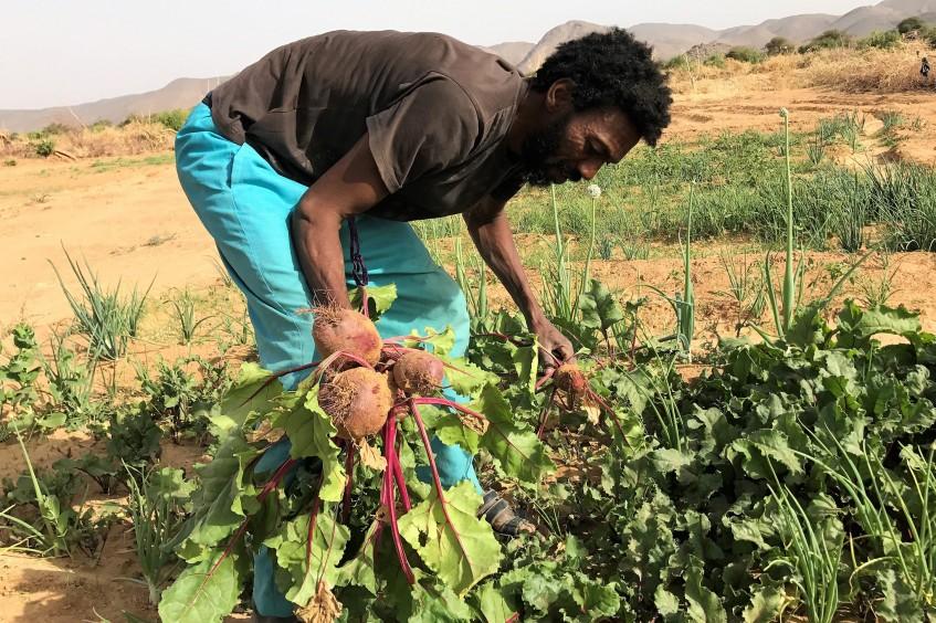 Mali : appui à la production maraichère à Kidal.