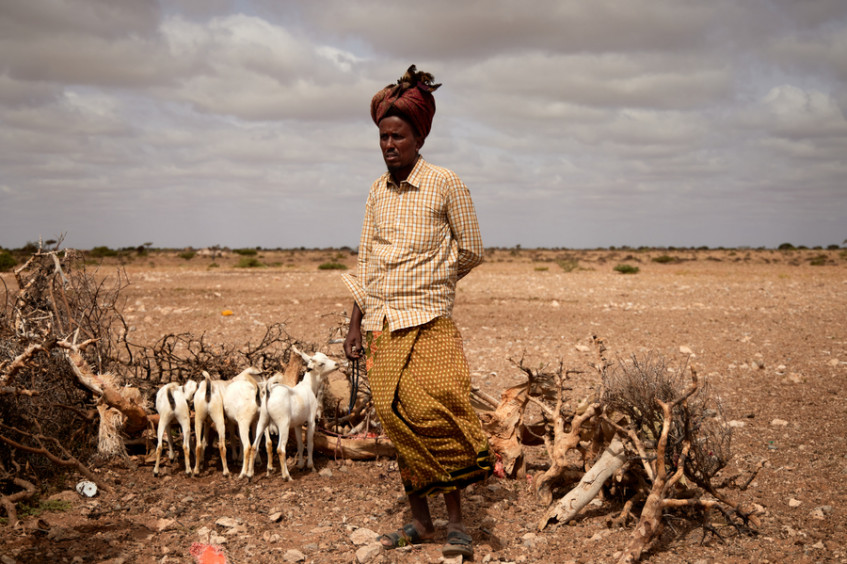 """""""If your animals die, you die with them"""" – Somali herders defenceless against the climate crisis"""