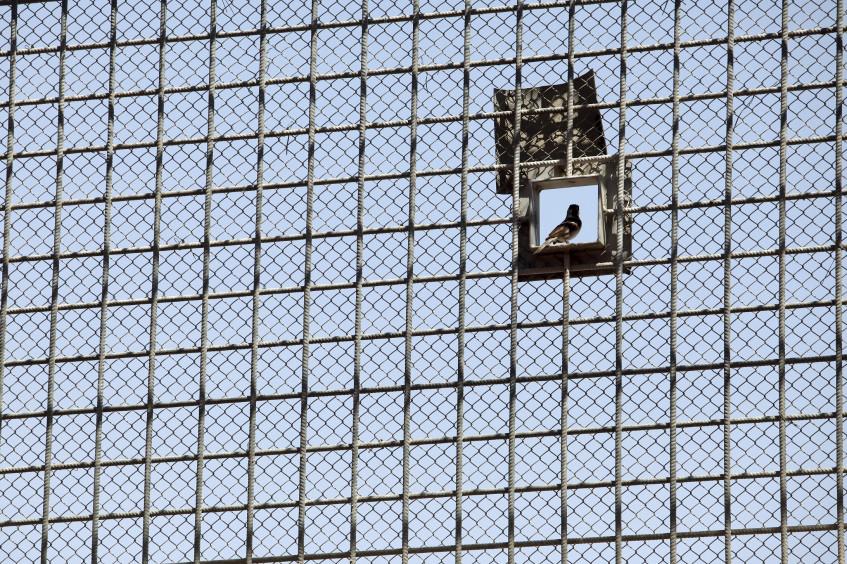 الإضراب عن الطعام والهدف من زيارات اللجنة الدولية