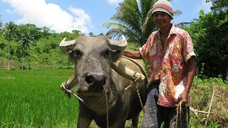 Filipinas: mantener las fuentes de ingresos de los agricultores en Negros