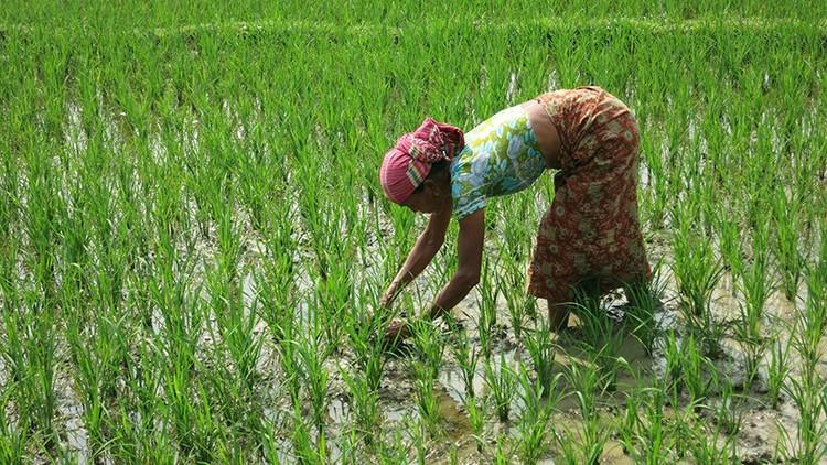 Bangladesh: mantener la esperanza y los ingresos en Chittagong Hill Tracts