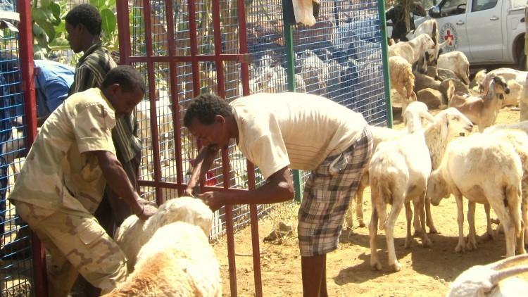 Eritrea: la salud del ganado garantiza la supervivencia de una aldea
