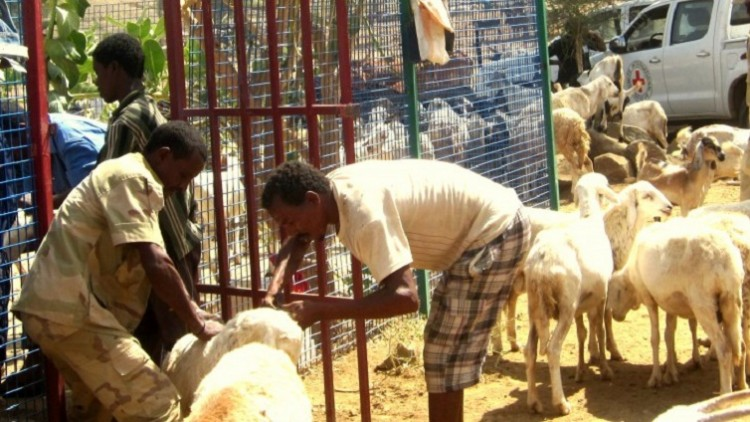 Eritreia: rebanho saudável garante sobrevivência de vilarejo
