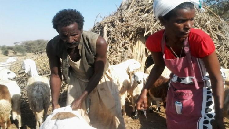 Érythrée : Faits et chiffres 2015